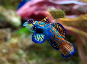 colorfulfish